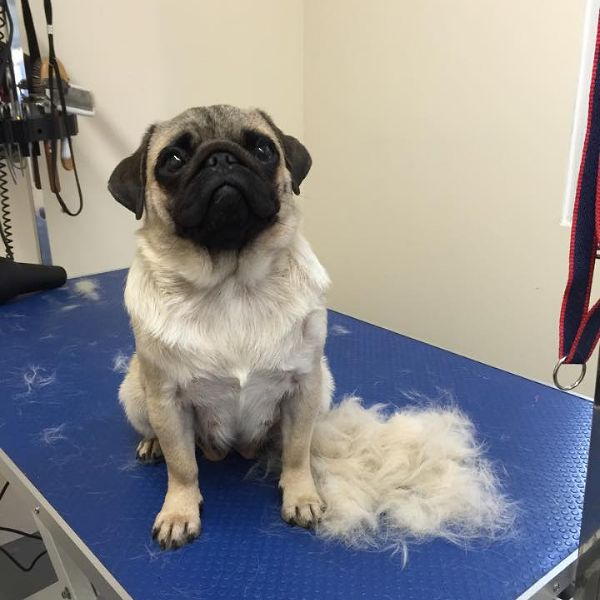 Best Pets Dog Grooming
