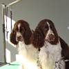 Logan and Molly ready for a trim