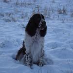 Plaiglen Memories - Logan in the snow